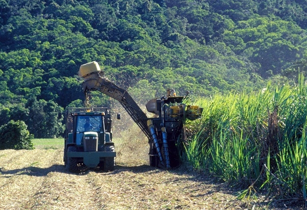 Brazil will provide the technology for processing sugarcane to produce ethanol