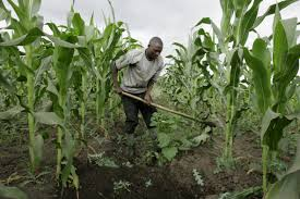 The agricultural sector provide plentiful prospects