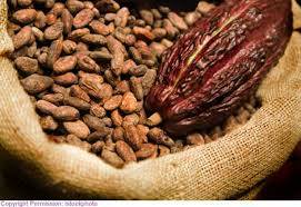 Cocobod's bean purchases reached 590,000 tonnes by mid-January