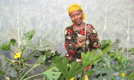 Women are increasingly involved in agriculture in sub-Saharan Africa
